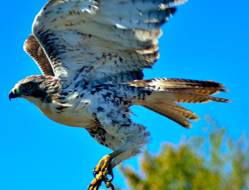 """1042 - """"Taking Flight""""  - Limited Edition Metal Print  (assorted sizes)"""