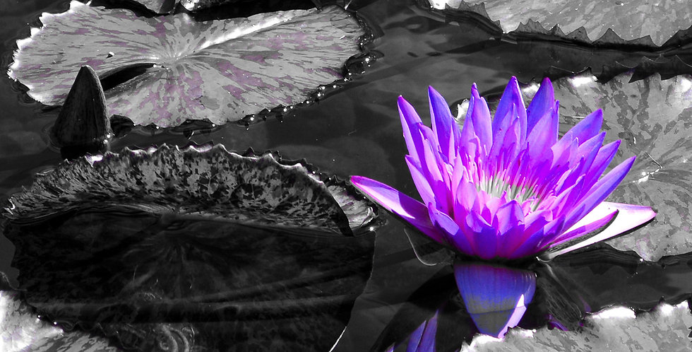 "1032 - ""Lavender Lily"" - Limited Edition Metal Print  (assorted sizes)"