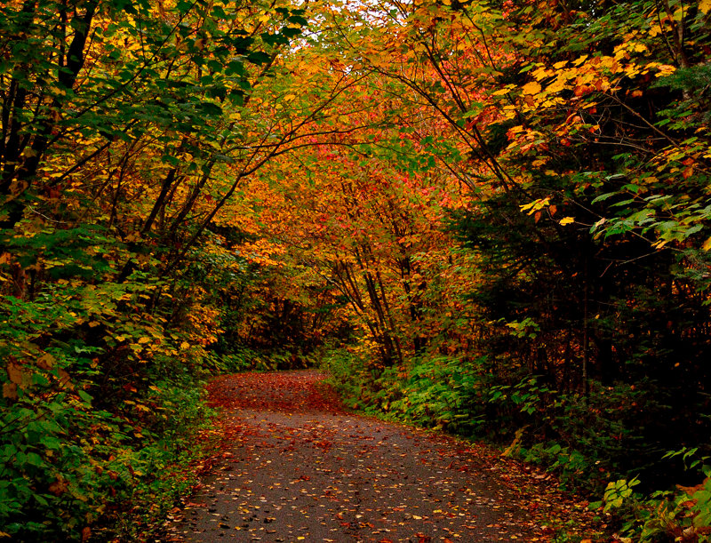 "1052 - ""Pathway to Autumn"" - Limited Edition Metal Print  (assorted sizes)"