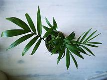 small-plant-palm.jpg