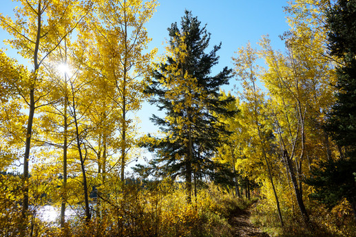 Autumn along Hay River, NWT