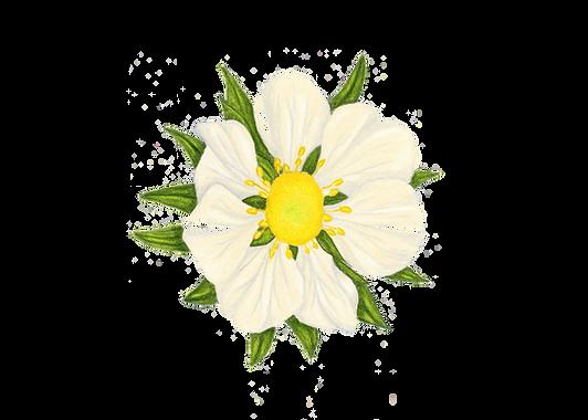 florsinfondo.png