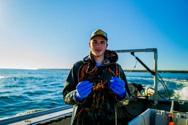 Market Lobster