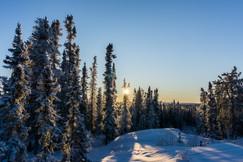 Winter Sunshine in the North Slave