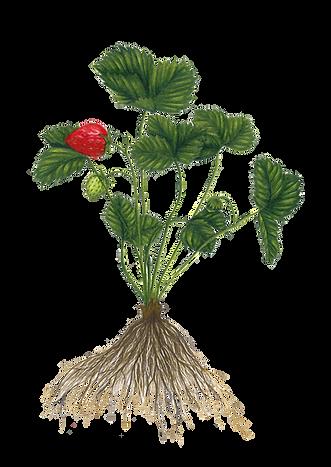 planta sin fondo.png
