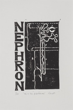 N is for Nephron