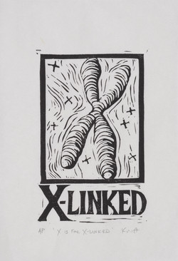 X is for X-linked