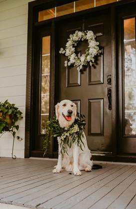 Fury Ventures Pet Care