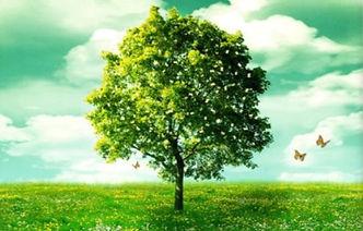 Summer Tree_edited.jpg