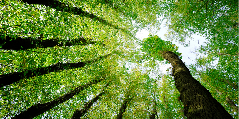 Nature Constellations in Brussels - Trees as a Resource