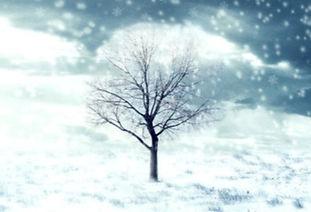 Winter Tree_edited.jpg