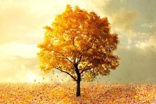 Autumn Tree_edited.jpg