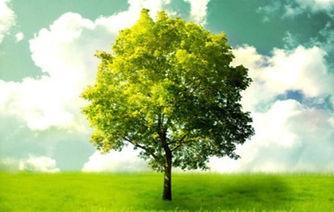 Spring Tree_edited.jpg
