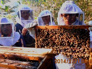 Honey – a sustainable alternative in Sierra de las Minas