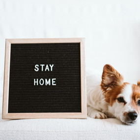 cute-jack-russell-dog-sofa-with-letter-b