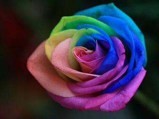 Flores curiosas: La flor arcoiris