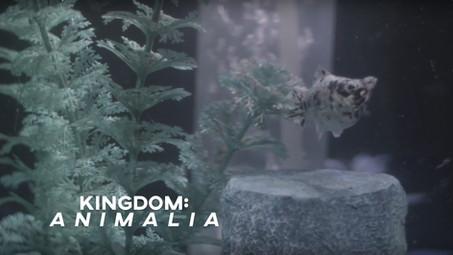 Kingdom: Animalia