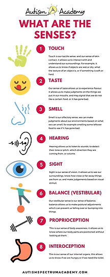 What are The Senses Infographic