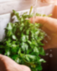mans-hands-washing-parsley-PS6MEF3.jpg