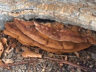 Fungi are fun 'guys'