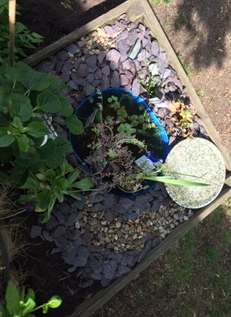 Pond Project
