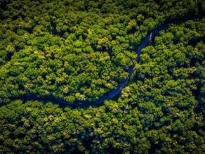 Helping the deforestation by drinking more Cachaça Novo Fogo