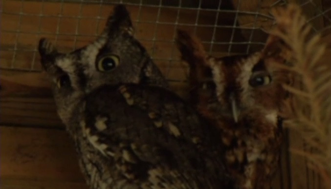 Deputies investigate theft of federally-protected owls