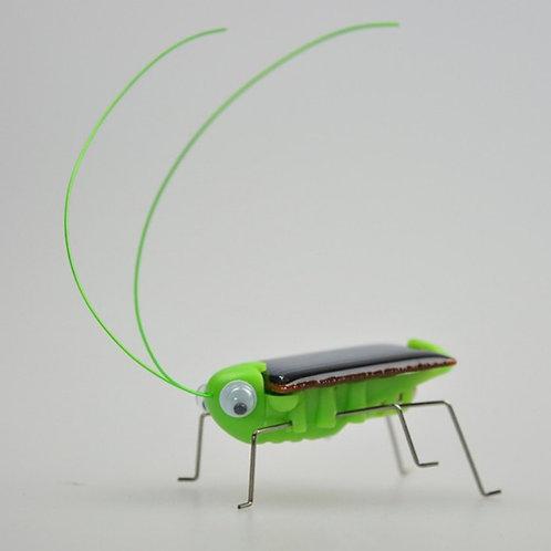 Saltamonte solar