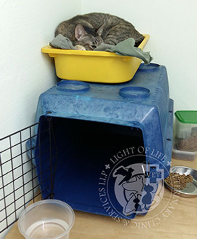 Light of Life Vet - Cat conditioned to be not afraid of the carrier