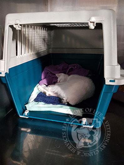 Light of Life Vet: Kitten sleeping in the carrier voluntarily.