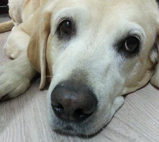 Light of Life Vet: Senior dog with vet