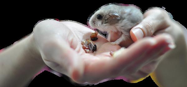 Hamsterinhand.png