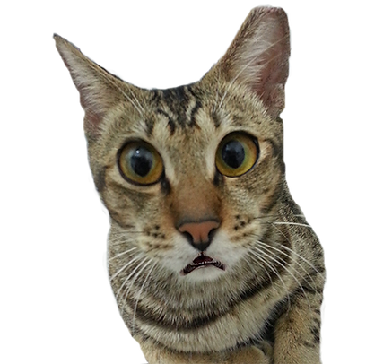 "Light of Life Vet Cat Patient: ""What?"""