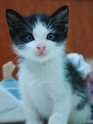 Light of Life Vet: Kitten rescued by clinic 6