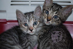 Light of Life Vet: Kitten rescued by clinic 3