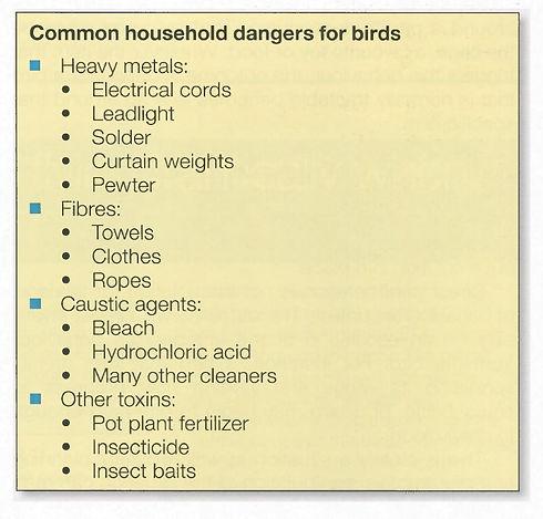 Light of Life Vet: House Hold Danger Parrots