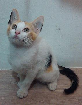 Light of Life Vet: Kitten rescued by clinic 4