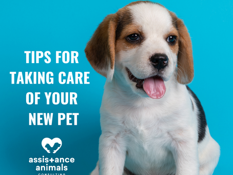 Tips for Taking Care of Your New Pet