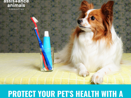 PROTECT YOUR PET'S HEALTH WITH A DENTAL CARE ROUTINE