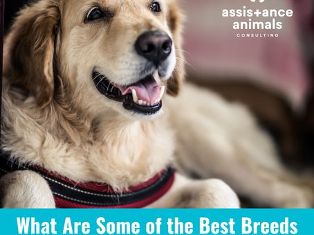 What Are Some of the Best Breeds for Service Dogs?