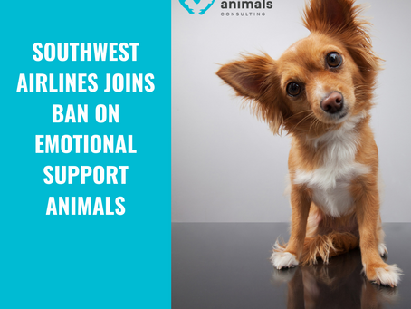Southwest Airlines Join Ban on Emotional Support Animals