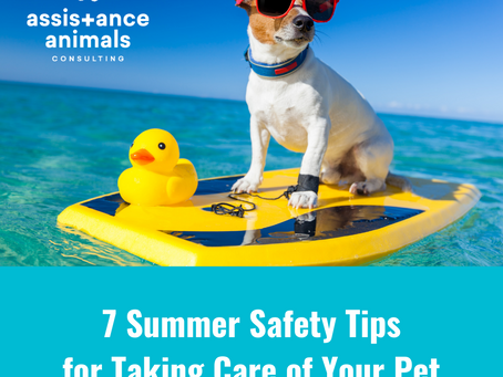 7 Summer Safety Tips for Taking Care of Your Pet