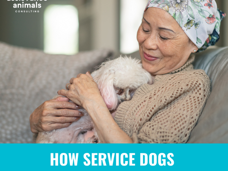 How Service Dogs Can Help Cancer Patients