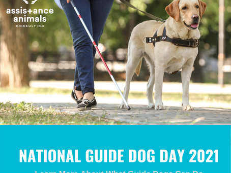 What Can Guide Dogs Do?