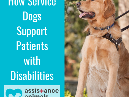How Service Dogs Support Patients with Disabilities