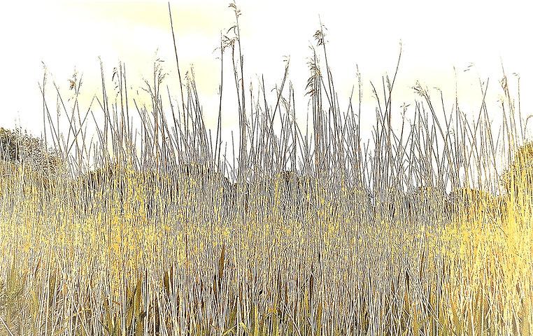 grasses_edited_edited.jpg