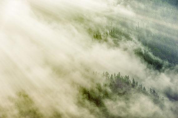 forest-5035798_1920.jpg