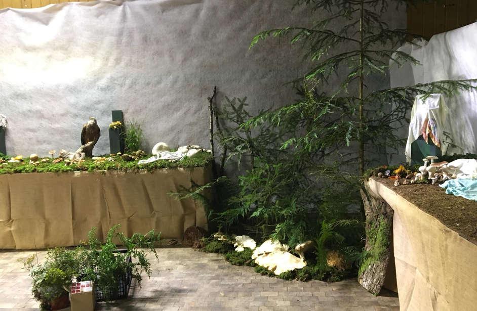 80 Jahre PV-Huttwil. Pilzausstellung