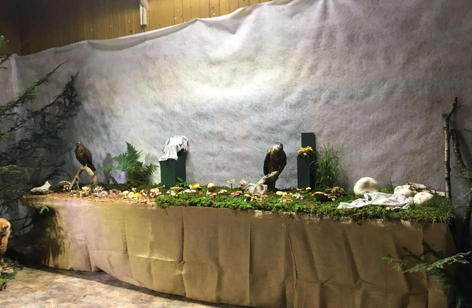 80 Jahre PV-Huttwil. Pilzausstellung 2018