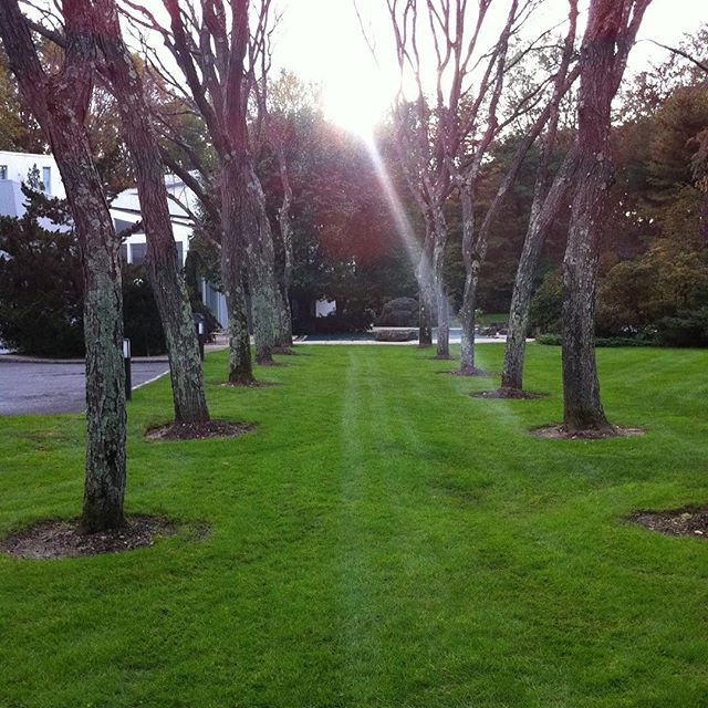 Pro-Lawn care for over 20 year